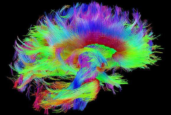 Psicologia cognitiva. Mente e cervello